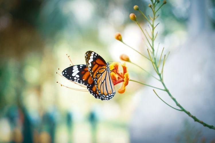 International Butterfly Park, Texas